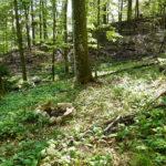 Bärlauchwald mit Feuerstelle